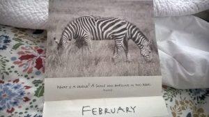 sometimes a friend is a two headed zebra...